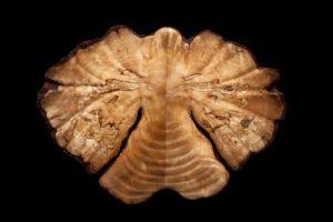 Angel, Engel in hout gemaakt door Arnaldo Lopez